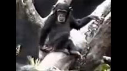 смешна маймуна
