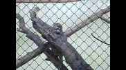 Мonkey - Zoo Sf