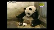 Сладко Бебе - Панда Киха