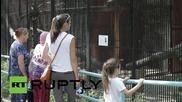 Домашна котка осинови рис в зоологическата градина в Новосибирск
