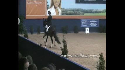 Horses - Take a bow (moe)