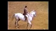 *рекорд* най - висок скок направен от кон (1983)