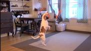 Куче срещу морков!