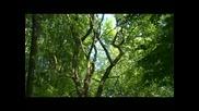 Адажио - Човек не е дърво