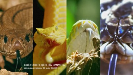 Световен ден на змията - 24 часов маратон