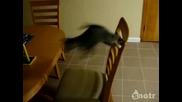 Сладко котенце се преби