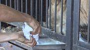 Russia: Meet TIGON! First lioness and tiger cross-breed cub born in Russia