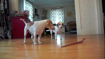 Кученце спасява сестра си от играчка змия