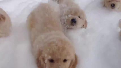 Малки кученца атакуват камерата