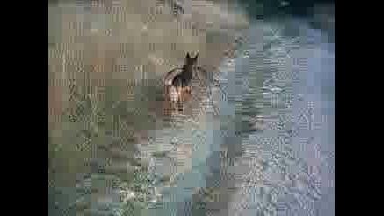 Това Ми Е Кучето