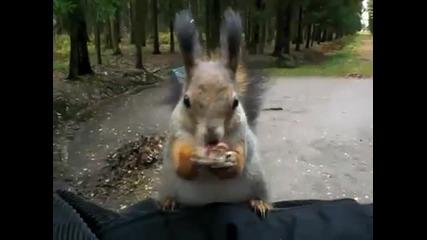 Катеричката е много гладна