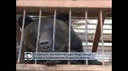 Пратиха бойни хеликоптери за спасяването на две мечки в руския Далечен Изток