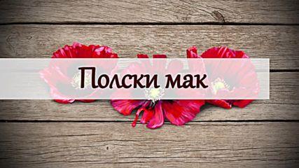 Чудотворните ползи на полския мак