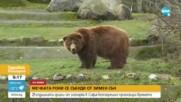 Мечката гризли от зоопарка в София се събуди от зимен сън