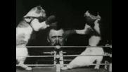 Уникaлни кадри: Боксиращи се котки отпреди 117 години!
