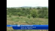 телевизия - Новини - Инциденти - Роми пребиха до смърт пазач на черешов масив