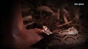 Тайната на историята на медната змия