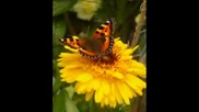 Kevin Kendle .. The Approach Of Summer ..little Wings from my garden.