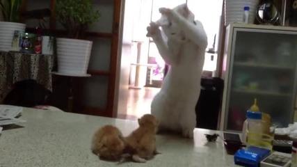 Коте за първи път вижда новородени малки котенца.