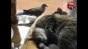 Спяща котка с нестандартен будилник !