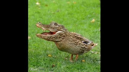 Голям Смях - Новите Видове Животни 2 Част