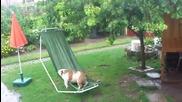 Булдог играе на хамак под дъжда в градината