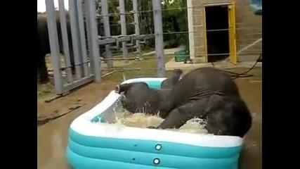Две сладки слончета си правят баня