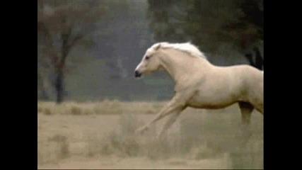 Horses/ Коне