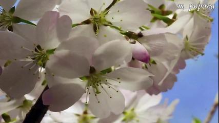 Честита пролет!!!
