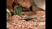 Гърмяща Змия Напада В Забавен Кадър