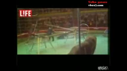 Когато лъв нападне човек в цирка