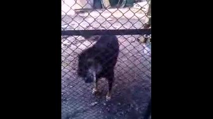 товa куче си гледa рaботaтa