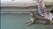Две диви котета се боричкат.