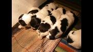 Кученца Бок На 2 Седмици