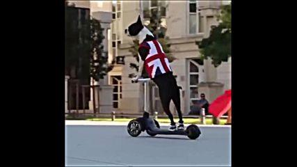 Първият олимпиец от Брекзит / Brexit в Рио 2016