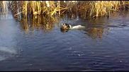 Апорт на патица (лед)