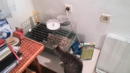 Котето Мърфи и заека Цезар