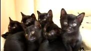 Малки Черни Дяволчета
