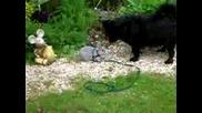Заичето Бонзаи И Кучето Тасси...