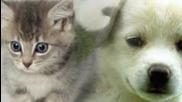 Сладки котенца и кученца