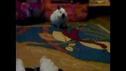 Как един заек се чисти ;d