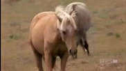 2/2 Cloud's Legacy - The Wild Stallion Returns (2003) Pbs Nature
