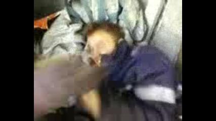 Jorko spi - Lesnovo