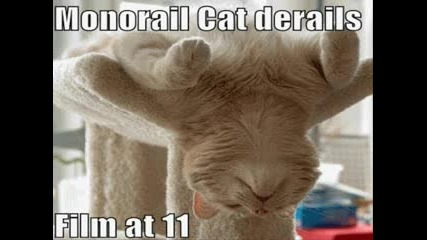 Смешно Коте