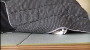 Най-смахнатата Котка Мару