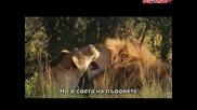 Бялото лъвче (2010) бг субтитри Част 1