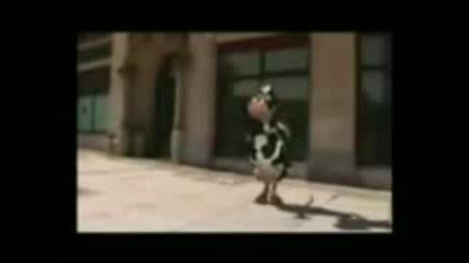 Luda Krava :d