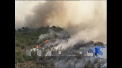 Пожари в Гърция са унищожили половината реколта от мастикова смола