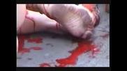 Обляни В Кръв Протестират пред Катедрала срещу избиването на животни