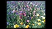 Цветя От България - Globe Rescue